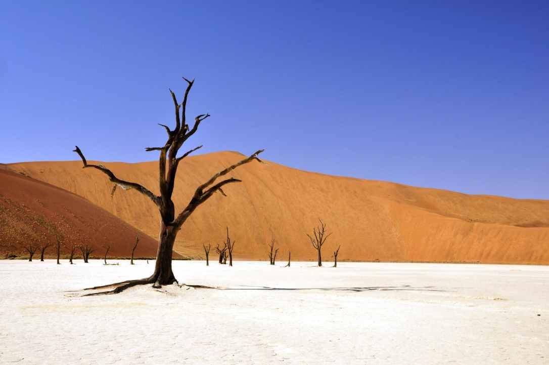 tree-desert-namibia-dead-vlei-68661.jpeg